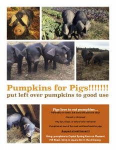 Pumpkins for Pigs
